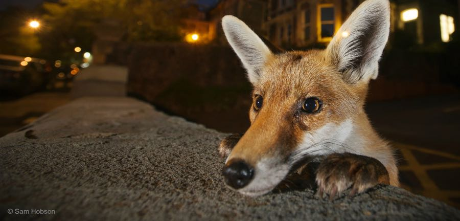 Wildlife Photographer of the Year in Hull